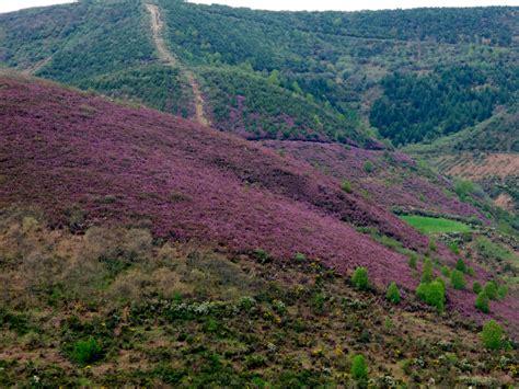 Heather-covered hills - Landscape & Rural Photos - Emelle
