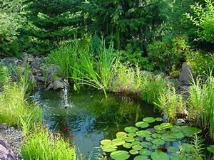 Wasserpflanzen Teich Kaufen : teichpflanzen sind f r tiere fische und den ~ Michelbontemps.com Haus und Dekorationen