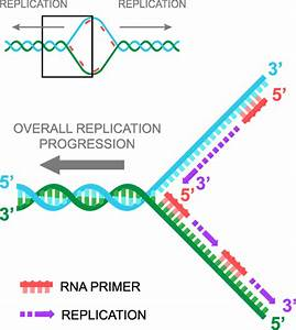 Pin By Lauren Sweany On Primer Dna Research