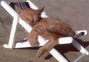 Mit Katze Umziehen : entspannung ~ Michelbontemps.com Haus und Dekorationen