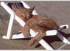 Lustige Postkarte Mit Katzenmotiv Katze Im Liegestuhl