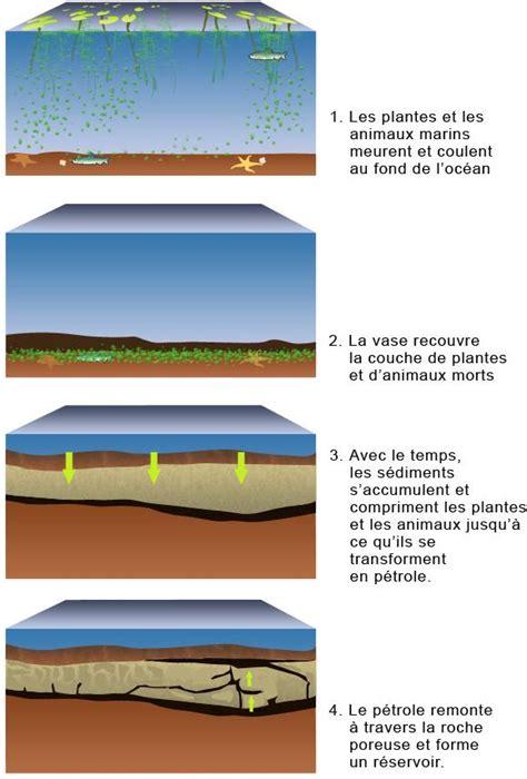 le petrole willem lucas