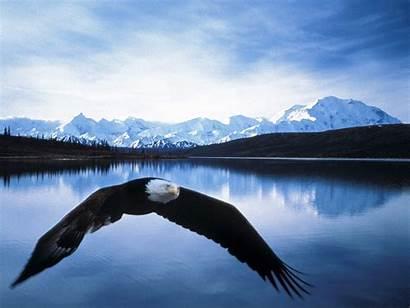 Alaska Hiking Denali National Galore Cruising Destinations