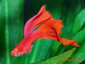 New Pet Fish Talk Show