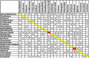 Kürbis Gute Nachbarn : vertr glichkeitstabelle gute nachbarn fruchtwechsel pinterest ~ Whattoseeinmadrid.com Haus und Dekorationen