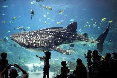 b 233 lugas russes captur 233 s pour le aquarium en 2005 dauphinlibre be