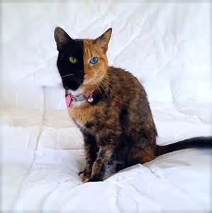venus the cat meet venus the cat with the most interesting in the