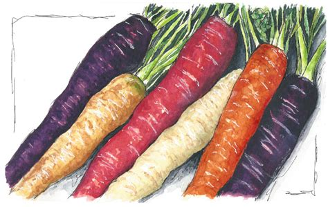 colorful carrots doodlewash 174 colorful carrots