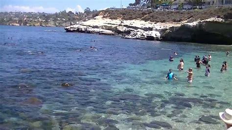 La Jolla Cove Swimming With Sea Lions!!! Youtube