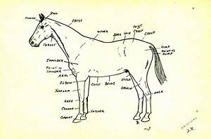 Diagram Of Horses