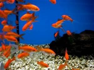 Welche Fische Passen Zusammen Aquarium : welche resonanz hat das buch abenteuer fischen von ~ Lizthompson.info Haus und Dekorationen