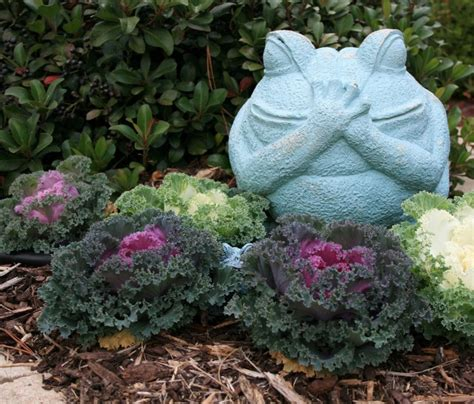 impressive ornamental cabbage decorations  beautify