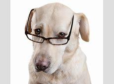 De Grappige Hond Van De Glazen Van De Lezing Stock Foto