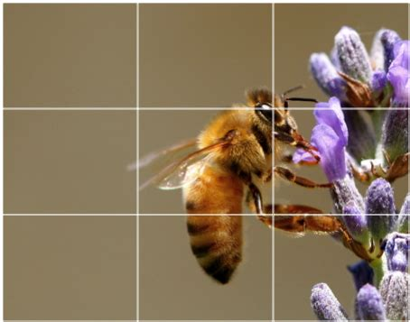 what is the rule of thirds rule of thirds in photography
