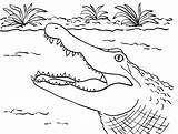 Alligator Coloring Pages Printable Crocodile Alligators Head Gator Printables Sheets Template Sauti Pata Drawing Templates Samanthasbell Animals Reference sketch template