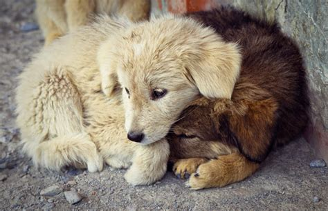 companion animal psychology december