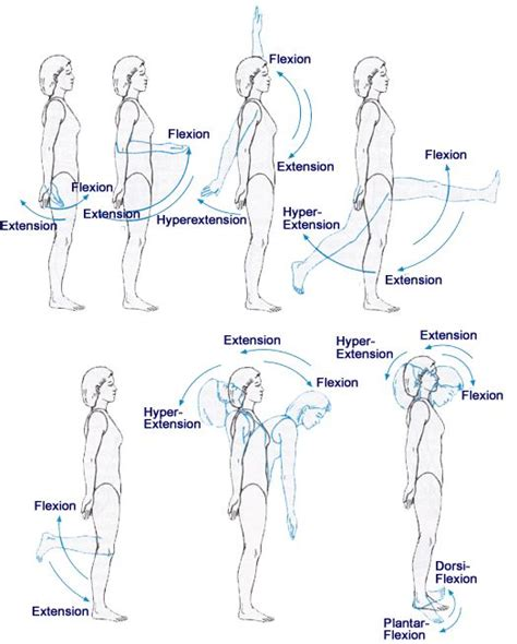 axis  planes  motion flexion extension