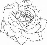 Coloring Flower Printable Pages Flowers Print Rose Roses Sheets Colouring Drawing Outline Drawings Realistic Adult Simple Adults Line Patterns Pattern sketch template