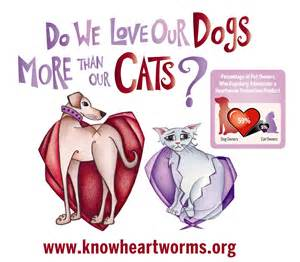 heartworm treatment for cats exclusively cats veterinary hospital april 2012