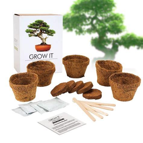 Bonsai Baum Pflanzen by Bonsai Baum Selber Pflanzen Und Z 252 Chten Bis Zu 5 St 252 Ck