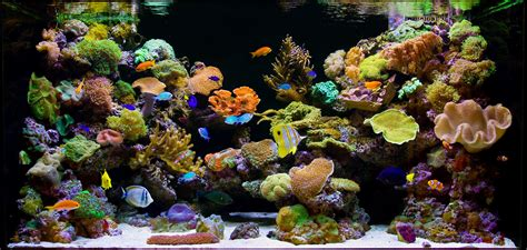 sea reef aquarium saltwater marine reef aquariums fish farm