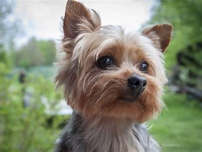 Dog Fainting Causes Should Health