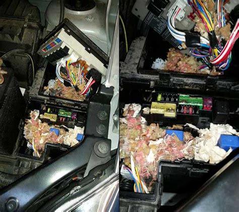 Car Fuse Box Repair by Mouse Damange In Car Fuse Box Leo Sons Auto Repair