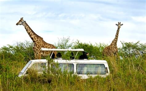 Best Safaris In Kenya Best Safari In Kenya Ultimate Guide To A Vacation In The