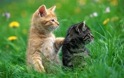 Cat Cats Wallpapers Grass Backgrounds Animal Desktop