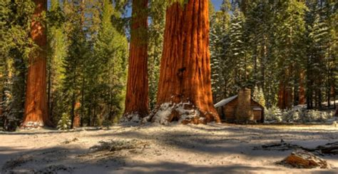 Yosemite Conservancy Hiking National Park Central