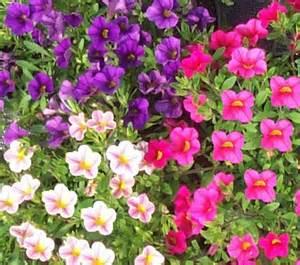 Plantes De Bureau Sans Soleil by Les Plantes Retombantes Jardinerie La Serre