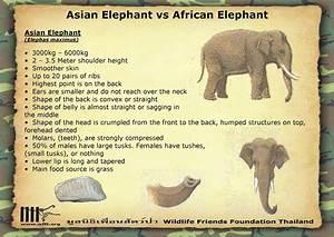 Encyclopaedia of Babies of Beautiful Wild Animals: The ...