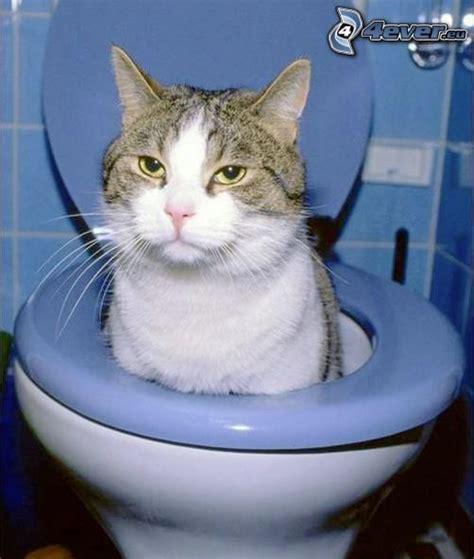 chat dans les toilette
