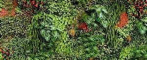 Mur De Fleurs : promo zalando lounge panier cadeau canada ~ Farleysfitness.com Idées de Décoration