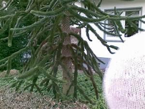 Was Ist Das Für Ein Baum : kakteenforum lithopsforum und sukkulentenforum von thomas schmid thema anzeigen was ist das ~ Buech-reservation.com Haus und Dekorationen