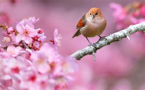 image result  beautiful spring desktop wallpaper birds
