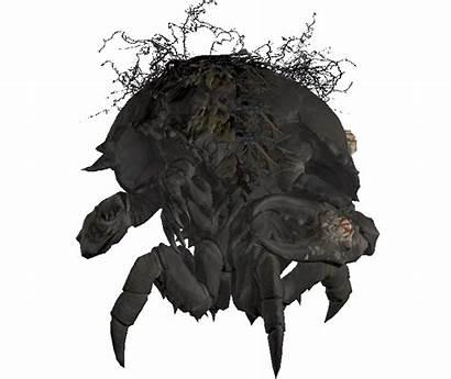 Mirelurk Fallout Location Vegas Vault Gamepedia Creature