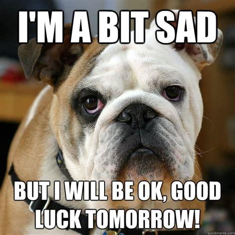 Bulldog Memes - unhappy bulldog memes quickmeme