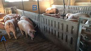 Training Gilts For Using Esf With Minimum Effort