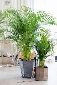 Pflanzen Als Inspiration Pflanzenfreunde
