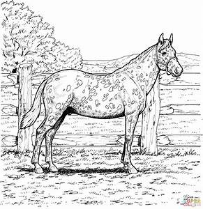 horse coloring pages printable free - free printable realistic horse coloring pages az