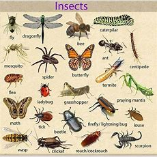 Learn English Vocabulary Through Pictures 100+ Animals Names  Esl Buzz
