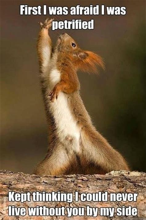 Funny Animal Meme Pictures - 25 hilarious animal memes