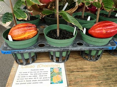 17 best images about cacao on pinterest words carrie