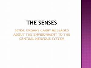 Chapter 13 Special Senses