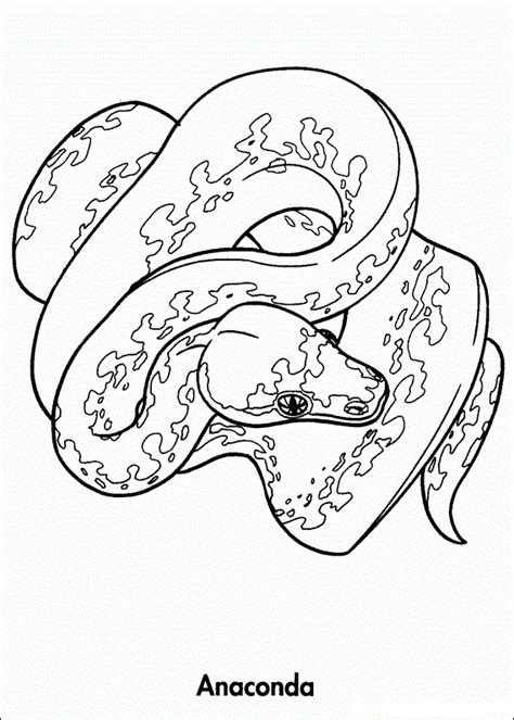 Rainforest Animals Coloring Pages by Rainforest Animals Coloring Pages Yahoo Image Search