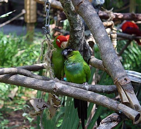 panama beach zoological conservatory florida fl tripadvisor zoo attraction