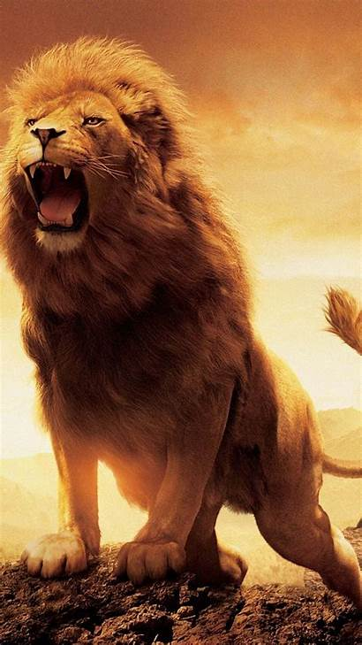 Lion Roaring Desktop Narnia Chronicles