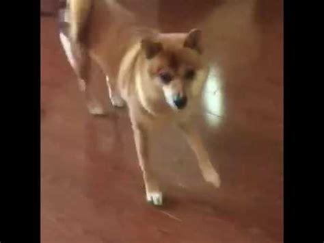 dancing doge youtube