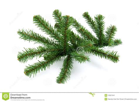 bare twig from christmas tree stock image image 12027541
